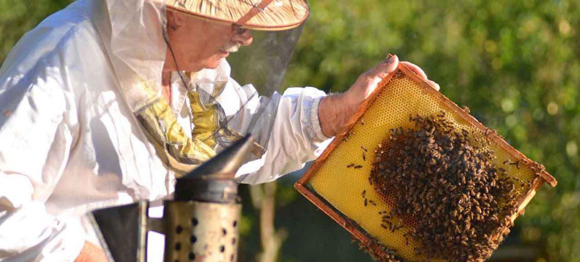 Devenir apiculteur : dans quel matériel investir